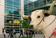 Omaha, Neb 5/6/06 Sticker, a Longhorn brought in by  Justin Boots to entertain the lines at the Berkshire Hathaway annual (Chris Machian/Prairie Pixel Group)