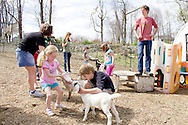 Cornwall, New York  - People feed the young dairy goats at Edgwick Farm in Cornwall on April 15, 2012. The farm uses milk from the goats to produce artisan cheese.
