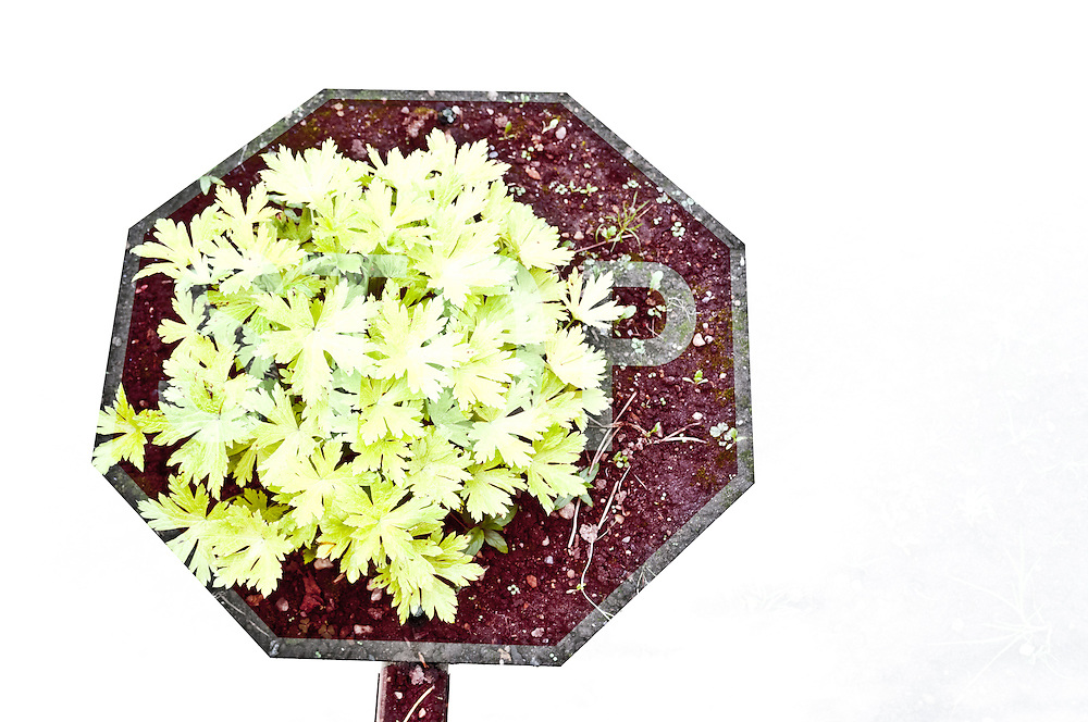 Multiple Exposure Image of a stop sign and a plant.