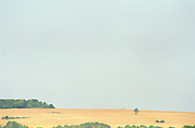 A dry field with a tree some bushes and a forest, blue sky, sun haze, a scorching hot summer, Bourgogne