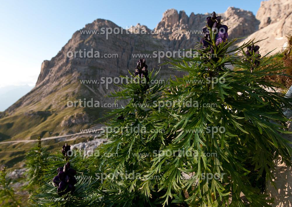 THEMENBILD - Sonnenuntergang am Laserz, Eisenhut Aconitum napellus  vor der Laserzwand, Lienzer Dolomiten, AUT, EXPA Pictures © 2011, PhotoCredit: EXPA/ M. Gruber