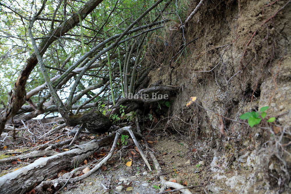 sandy edge with tree growth by riverbed