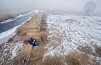ZILVEREN CAMERA 2e PRIJS NATUUR EN MILIEU series- Rietdekker Bert Lok en zijn medewerker Klaas maken in de winter dankbaar gebruik van het ijs om bij het rietland te komen en daar het wiedenriet te maaien en te bossen.