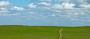 Dirt Road Through the Central Valley Grasslands