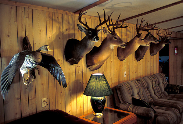 Stock photo of deer heads and a duck adorn the walls of a Texas hunting cabin