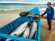 18 JULY 2016 - KUTA, BALI, INDONESIA:  A worker checks out the catch of  yellowfin tuna brought in by small boat at Pasar Ikan pantai Kedonganan, a fishing pier and market in Kuta, Bali. The fish were caught by trawlers working in Indonesian waters and transferred to smaller boats which then brought the yellowfin into shore. Yellowfin are extremely popular with Japanese consumers for sushi and sashimi and the best yellowfin caught in Indonesian waters are sent directly to Japan.   PHOTO BY JACK KURTZ