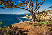 Point Lobos State Reserve looking north from the north shore trail, near Carmel, California, Highway 1,