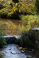 Reflections of grass in a stream in the Kenrokuen Garden, Kanazawa, Ishigawa, Japan