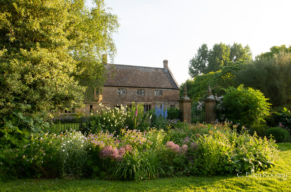 Early morning light hitting the herbaceous borders in front of Lower Severalls Farmhouse,  Crewkerne, Somerset, UK