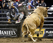 Fabiano Vieira rides Jack Shot during the Professional Bull Riders, Built Ford Tough Series at the Sprint Center, Saturday, Feb. 11, 2017, in Kansas City, Mo. (AP Photo/Colin E. Braley)