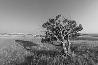 https://Duncan.co/badlands-tree