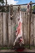 Butchering sheep<br /> Chimborazo Province<br /> Andes<br /> ECUADOR, South America