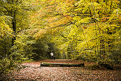 © Licensed to London News Pictures. 22/10/2020. Burnham, UK. A woman walks her dog through autumnal colours at Burnham Beeches national park and National Nature Reserve in Buckinghamshire, south East England. Photo credit: Ben Cawthra/LNP