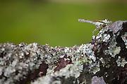 Sao Roque de Minas_MG, Brasil...Parque Nacional da Serra da Canastra em Sao Roque de Minas, Minas Gerais. Na foto um inseto...Serra da Canastra National Park in Sao Roque de Minas, Minas Gerais. In this photo a inset...Foto: JOAO MARCOS ROSA / NITRO..