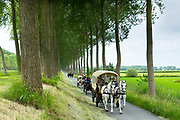 Horses and Carriages riding by avenue of tall trees canaliside at Damme, province of West Flanders, Belgium
