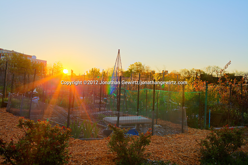 The sun rises over an community garden in Washington, DC. WATERMARKS WILL NOT APPEAR ON PRINTS OR LICENSED IMAGES.