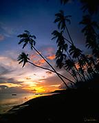 Kapuaiwa Coconut Grove, Molokai, Hawaii, USA