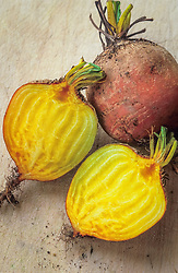Beetroot 'Burpee's Golden' cut open to show unusual colouring