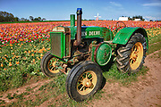 USA, Oregon, Woodburn, an Old John Deere sits in the tulip field at the Wooden Shoe Tulip Farm during the tulip festival. Digital Composite, HDR