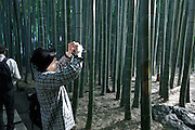 woman photographing light rays shining through the bamboo grove