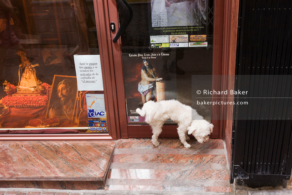 A small dog pees in the foorway of a religious shop in La Herradura on the Costa del Sol.