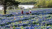 Meadow View Nature Area, Bluebonnet Trail, Ennis, Texas