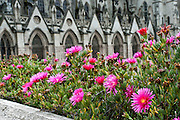 """Ice plant flowers (Family Aizoaceae or Ficoidaceae) bloom at Basilica of the National Vow (Spanish: Basílica del Voto Nacional), a Roman Catholic church, neo-Gothic in style, located a few blocks away from Plaza de la Independencia in Quito, Ecuador, South America. Interesting gargoyles (grotesques) of Ecuadorian fauna adorn the exterior. Construction began in 1892. Pope John Paul II blessed the Basilica on January 30th, 1985 and in 1988 it was declared immaculate. Although the church was consecrated in 1988, it remains technically """"unfinished."""" The Basilica is 150 meters long, 35 meters wide, 35 meters high in the sanctuary and 15 meters in the votive chapels. Its towers are 78.23 meters high, 73 meters in the dome, 16 meters by 45 meters on the base of its towers. San Francisco de Quito, most often called Quito (elevation 9350 feet), is the capital city of Ecuador. UNESCO honored City of Quito as a World Heritage Site in 1978. Quito was founded in 1534 on the ruins of an Inca city. Despite the 1917 earthquake, the city has the best-preserved, least altered historic center in Latin America."""
