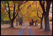 A fall colored tree lined road in Fluvanna County, Va.