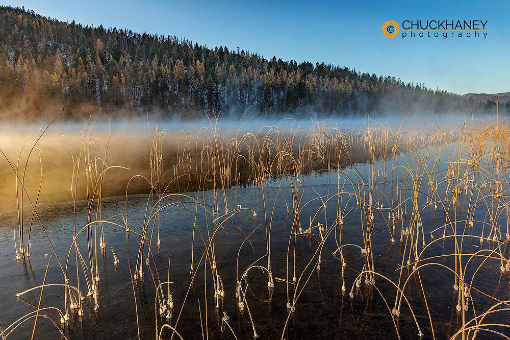 Icy reeds at sunrise on cold morning at Spencer Lake near Whitefish, Montana, USA