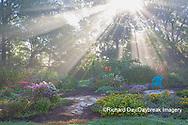 63821-23802 Sun rays in fog in flower garden, Marion Co., IL