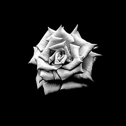 A rose is never just a rose