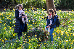 © Licensed to London News Pictures. 22/03/2021. London, UK. (Left) Victoria Peake with Isabella, 4 months and (right) Juliet Carter with Clemmie, 10 months, enjoy the spring flowers and warm sunshine in Cannizaro Park in Wimbledon Village, South West London this afternoon as weather forecasters predict a sunny and mild week ahead with highs of 14c rising to 18c next week. Photo credit: Alex Lentati/LNP