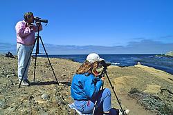 Watching Wildlife At Point Lobos