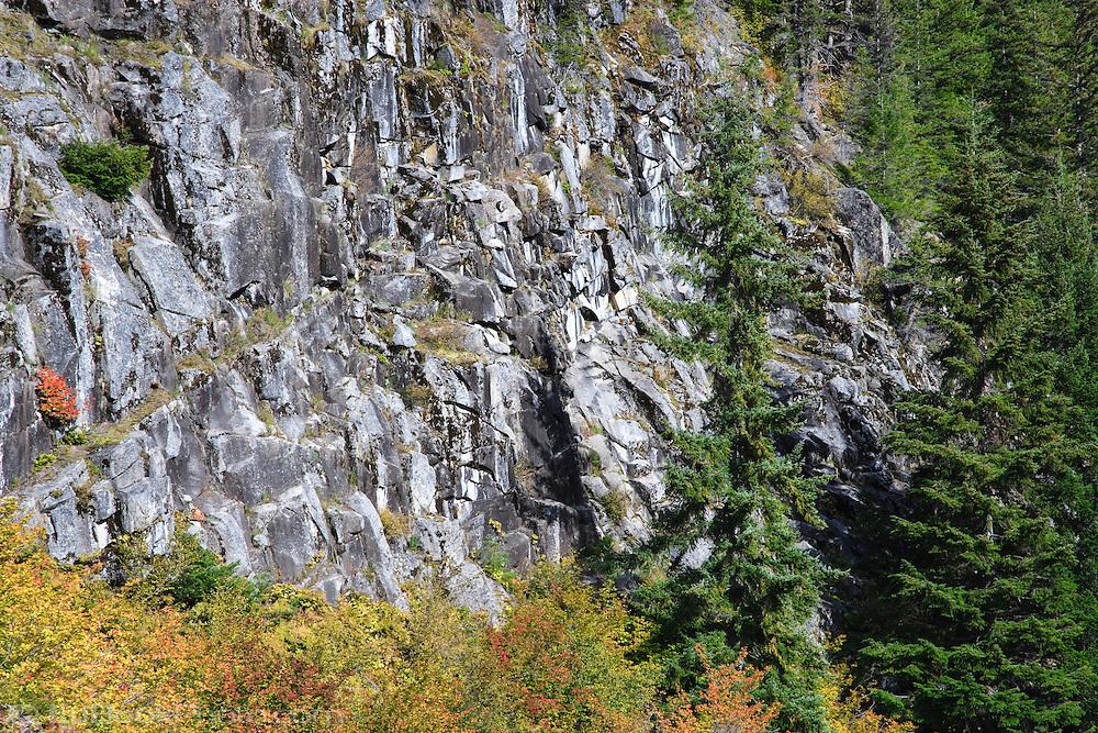 Autumn color paints the vine maple blanketing the Stevens Canyon mountainside in Mount Rainier National Park, WA, USA.