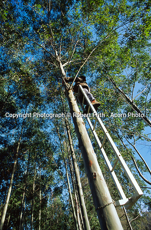 Agroforest Plantation