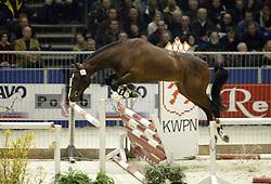 692 T Umonia<br />KWPN hengstenkeuring 2003<br />Photo © Dirk Caremans