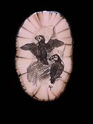 Pair of horned puffins scrimshawed on fossilized walrus ivory by Ellen Paneok, Inupiat Eskimo artist, Alaska.