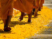 """02 JANUARY 2016 - KHLONG LUANG, PATHUM THANI, THAILAND:  Monks from the Dhammakaya sect walk on a path of marigols laid down by Buddhist lay people at Wat Phra Dhammakaya on the first day of the 5th annual Dhammachai Dhutanaga (a dhutanga is a """"wandering"""" and translated as pilgrimage). More than 1,300 monks are participating pilgrimage through central Thailand. The purpose of the pilgrimage is to pay homage to the Buddha, preserve Buddhist culture, welcome the new year, and """"develop virtuous Buddhist youth leaders."""" Wat Phra Dhammakaya is the largest Buddhist temple in Thailand and the center of the Dhammakaya movement, a Buddhist sect founded in the 1970s. The monks are using busses on some parts of the pilgrimage this year after complaints about traffic jams caused by the monks walking along main highways.         PHOTO BY JACK KURTZ"""