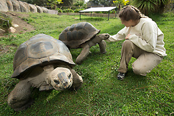 Chelsea Williams, a zookeeper at the Oakland Zoo, visits with two of the zoo's giant tortoises, Tuesday, Oct. 23, 2012 in Oakland, Calif. Williams, an Oakland native who attended UC-Santa Cruz, has been a keeper at the zoo for three years, caring for animals as varied as baboons, bats and river otters. (D. Ross Cameron/Staff)