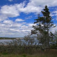 North America, Canada, Nova Scotia, Martinique Beach. Trees frame Martinique Beach.