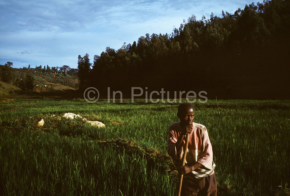 Saidi Ruhimbana (40), who has AIDS, works in his fields, which he must continue to do throughout his illness as his wife also suffers from the disease. Kibileze, Rwanda.