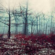 Wald an einem Wintertag, Wuppertal, Deutschland<br /> Redbubble products: https://www.redbubble.com/shop/ap/61107136?asc=u
