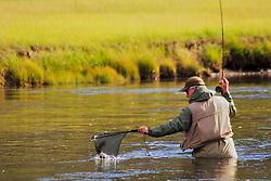 fly-fishing, madison river, yellowstone national park, fish, net,