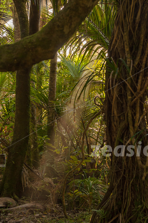Late evening sunlight, pushing through the salty spray of the heavy surf of the Tasman Sea, giving the lush coastal rain forest along the Heaphy Track a soft glow, blur and depth. Coastal Heaphy track, leading along the west coast of the South Island of New Zealand.