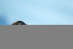 24.09.2014, Casino Stadion, Kitzbühel, AUT, OeFB Samsung Cup, FC Kitzbühel vs FK Austria Wien, im Bild Gerald Baumgartner (Trainer, FK Austira Wien) // during the Austrian Cup, 2nd round Match between FC Kitzbühel and FK Austria Vienna at the Casino Stadium, Kitzbühel, Austria on 2014/09/24. EXPA Pictures © 2014, PhotoCredit: EXPA/ JFK