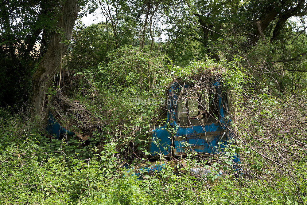 an abandoned rusting small truck wreck in the woods