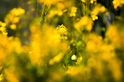 Blurry yellow and green spring flowers