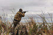 Photo No 9 of series - Hunter kills canvasback drake on open water marsh.