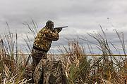 Photo No 9 of series - Hunter kills canvasback drake on open water marsh.
