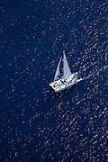 Catamaran sailboat, Kohala Coast, Island of Hawaii